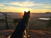 Max, overlooking the Cowichan Valley from the Cross at sunset.
