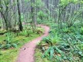 Sweet trails
