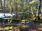 Seasonal Pond