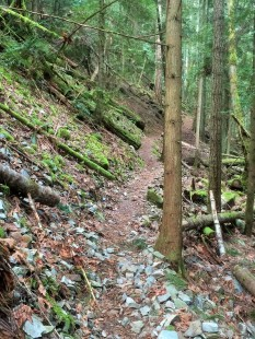 Pink Trail