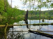 Beautiful Crofton Lake