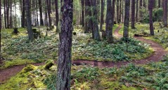 Smooth Flowy trails (Photo: Alistair Thompson)